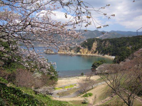 11-04-04koganezaki-sakura (33)