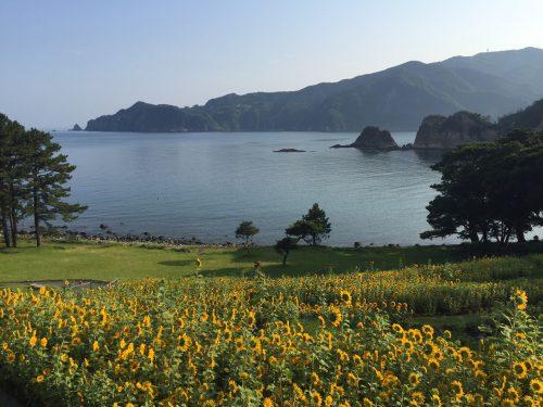 静岡県西伊豆町黄金崎公園ビーチの今朝の海況の画像です。ここはダイビングはもちろんシュノーケリングや体験ダイビングも楽しめる絶景ポイントです。