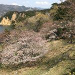 17-04-05sakura4