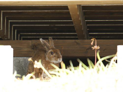 静岡県の伊豆半島の西側、西伊豆地区にある黄金崎ダイビングポイントで見たウサギです。