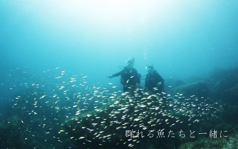 西伊豆黄金崎公園で体験ダイビングで魚の群れと戯れよう