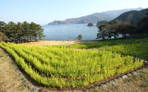 西伊豆黄金崎は日本でも絶景のダイビングポイント春は菜の花と桜