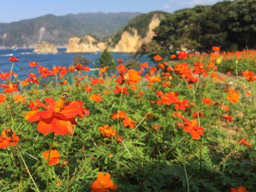 17-11-04kibanakosumosu-1