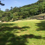 芝生の広場:静岡県西伊豆町黄金崎公園ビーチのダイビングで見れました。ここはダイビングはもちろんシュノーケリング(スノーケリング)や体験ダイビングも楽しめる絶景ポイントです。