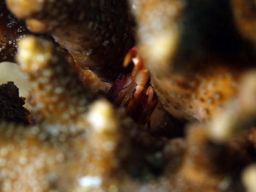 西伊豆黄金崎公園ビーチ サンゴ