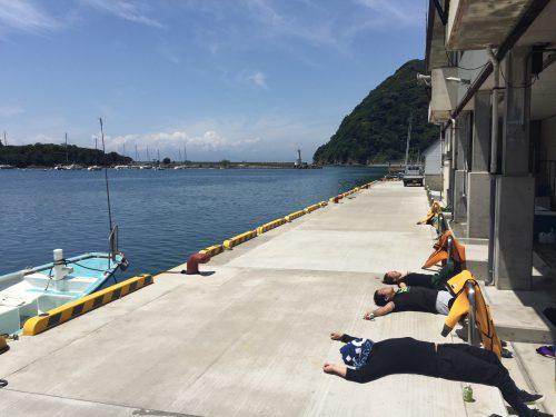 日向ぼっこ:静岡県西伊豆町黄金崎公園ビーチのダイビングで見れました。ここはダイビングはもちろんシュノーケリング(スノーケリング)や体験ダイビングも楽しめる絶景ポイントです。