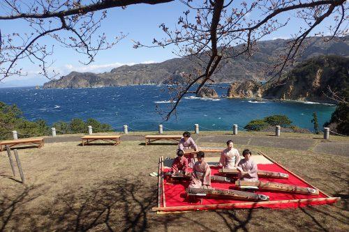 お琴:静岡県西伊豆町黄金崎公園ビーチのダイビングで見れました。ここはダイビングはもちろんシュノーケリング(スノーケリング)や体験ダイビングも楽しめる絶景ポイントです。