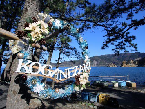 リース:静岡県西伊豆町黄金崎公園ビーチのダイビングで見れました。ここはダイビングはもちろんシュノーケリング(スノーケリング)や体験ダイビングも楽しめる絶景ポイントです。